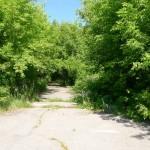 森の中のように見えるが、もともと住宅地の道路。この道の両脇に家が建っていたらしい。